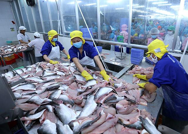 10 doanh nghiệp xuất khẩu cá tra, cá basa Việt Nam không bị Hoa Kỳ áp thuế chống bán phá giá