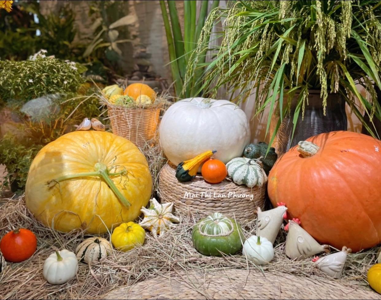 Ấn tượng với cách trang trí bằng bí ngô ngộ nghĩnh chào đón Halloween