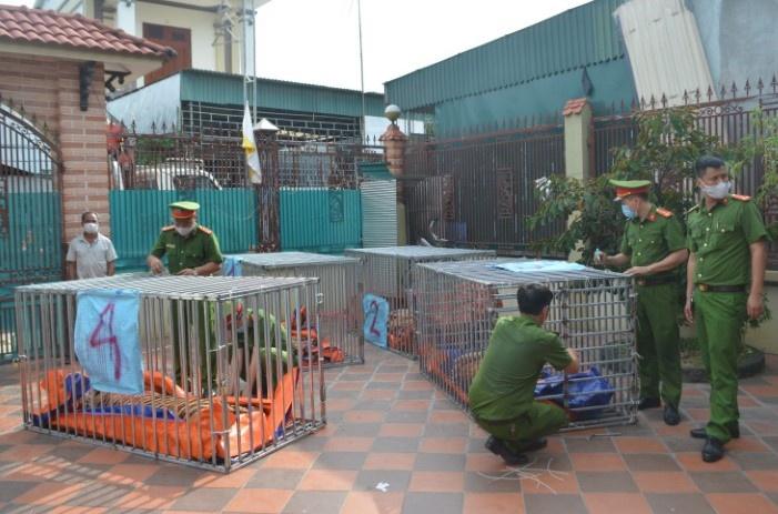 """Bắt giữ hai vụ nuôi nhốt 17 con hổ Đông Dương """"như nuôi heo"""" lớn nhất ở Nghệ An"""
