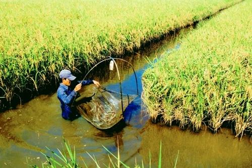 Cà Mau có đủ thế mạnh để phát triển nông nghiệp xanh, sạch