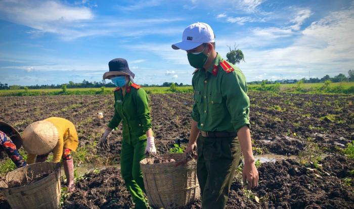 Công an huyện Giồng Riềng giúp dân tiêu thụ gần 180 tấn khoai lang