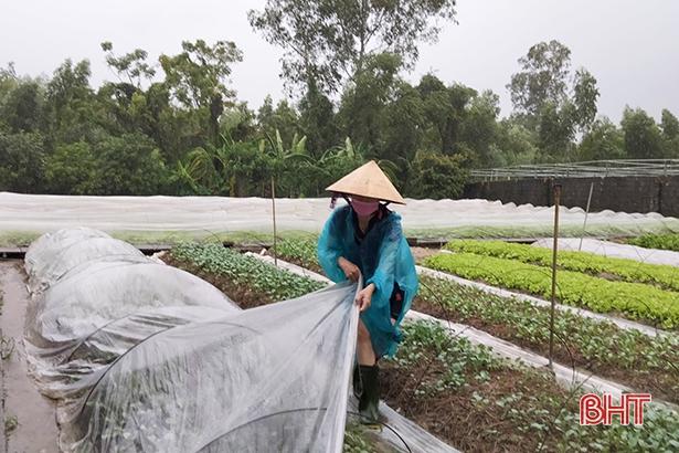 Công tác ứng phó trước bão số 8 của nông dân Can Lộc (Hà Tĩnh)