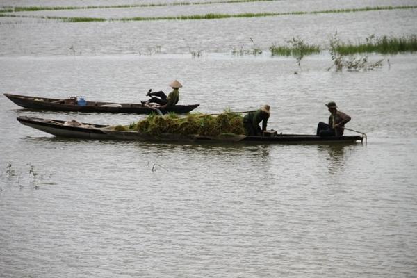 Đắk Lắk: Mưa lớn ngập 300ha lúa chưa kịp chín,người dân mượn thuyền chở lúa
