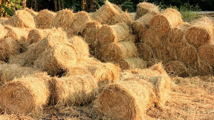 Dừng việc đốt rơm rạ sau thu hoạch, nông dân thu lãi lớn