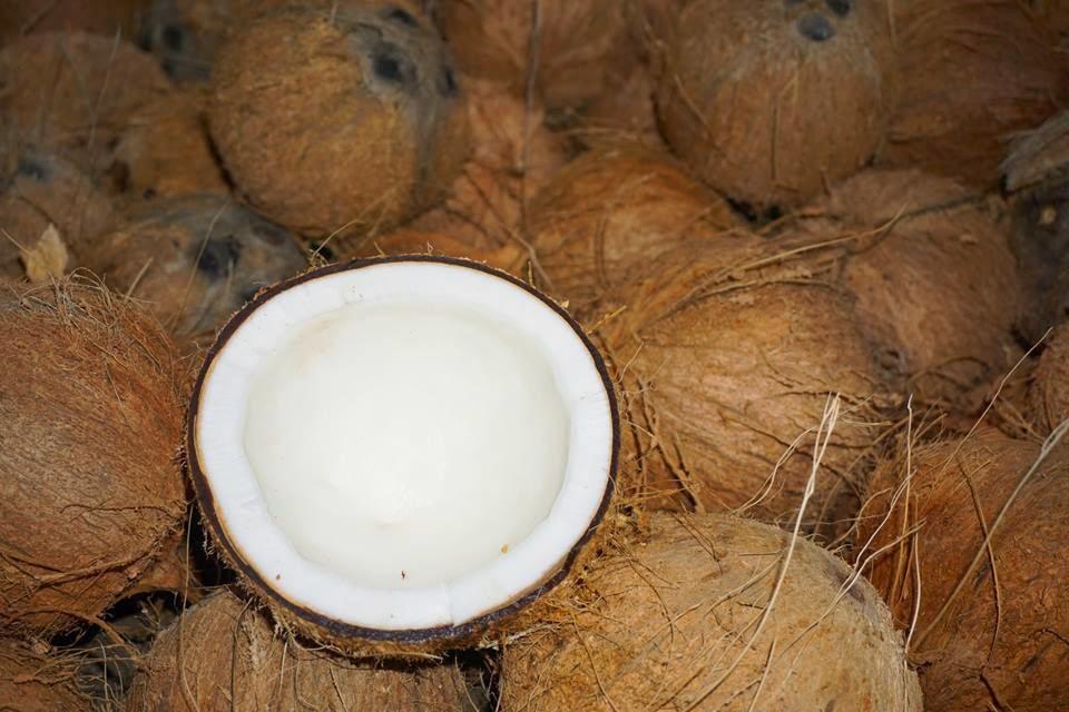 Giá dừa khô ĐBSCL tăng mạnh, đạt mức 120.000 đồng/chục