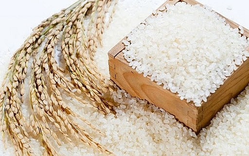 Giá lúa gạo hôm nay 12/10: Bất ngờ bật tăng