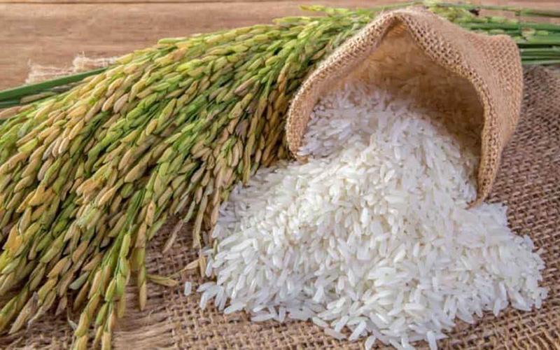 Giá lúa gạo hôm nay 15/9: Không biến động so với hôm qua, giá lúa Thu Đông thu hoạch sớm giảm