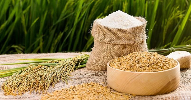 Giá lúa gạo hôm nay 8/10: Gạo có dấu hiệu khởi sắc