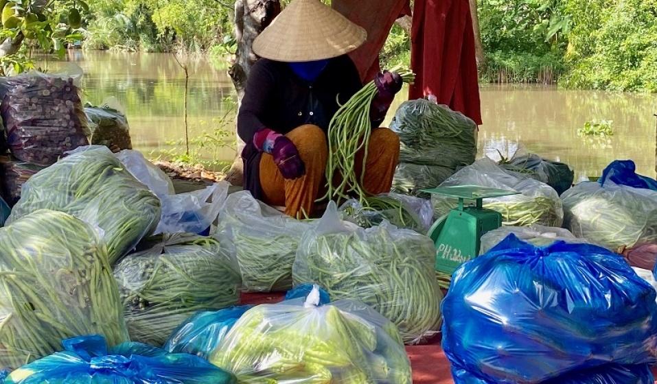 Hậu Giang: Gần 10.000 tấn nông sản không có thương lái thu mua