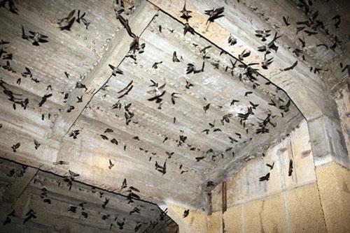 Không thể chăm sóc, thu hoạch giữa mùa dịch, người nuôi chim yến thiệt hại lớn
