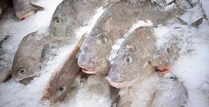 Mẹo chọn cá ngon khi đi chợ dành cho các bà nội trợ