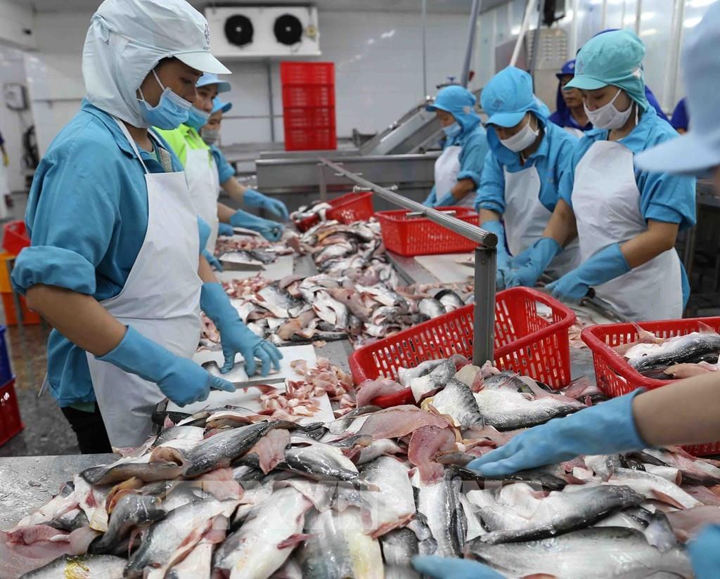 Mexico là thị trường xuất khẩu cá tra lớn nhất của Việt Nam ở khu vực Mỹ Latinh