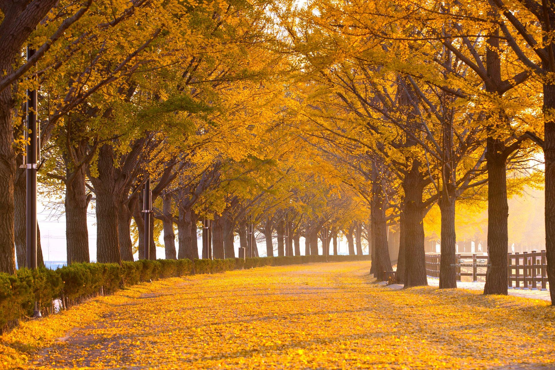 Mùa thu Hàn Quốc có gì đặc biệt? Trải nghiệm mùa thu tại Hàn Quốc