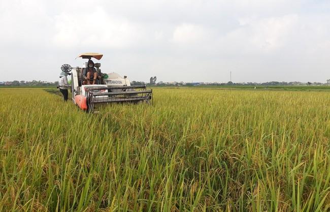 Nam Định: Nông dân phấn khởi được mùa lúa, năng suất cao nhất 5 năm