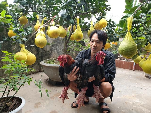 Ninh Bình: 8x kiếm vài chục triệu mỗi tháng nhờ nuôi thứ gà này giữa mùa dịch Covid-19