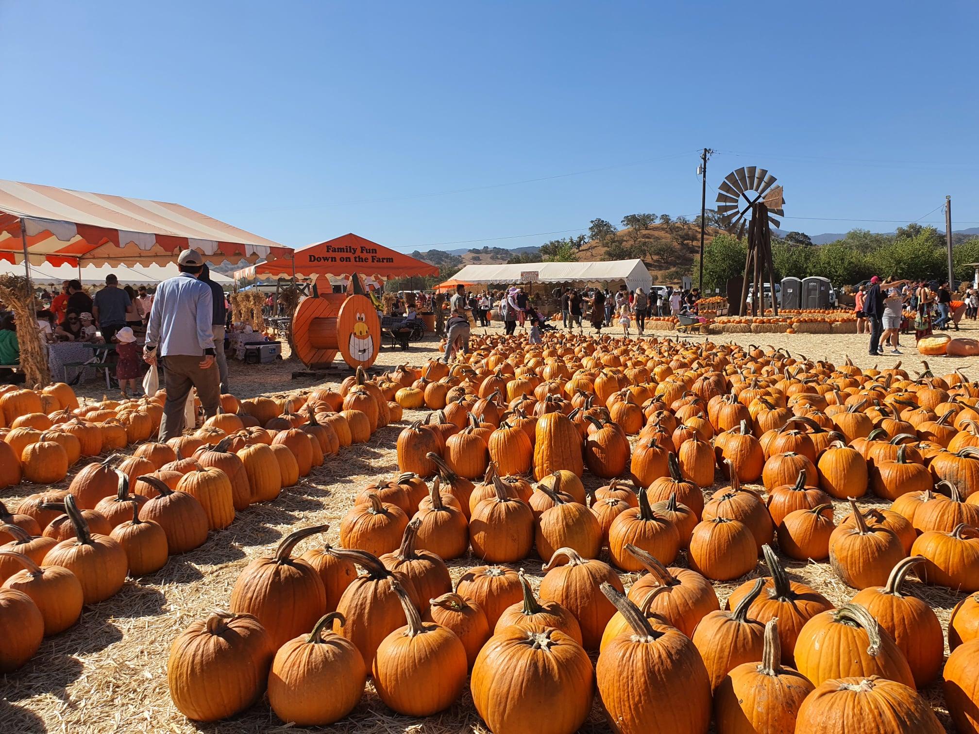 Sát ngày lễ Halloween, trải nghiệm 1 ngày tại vườn bí ngô ở Mỹ