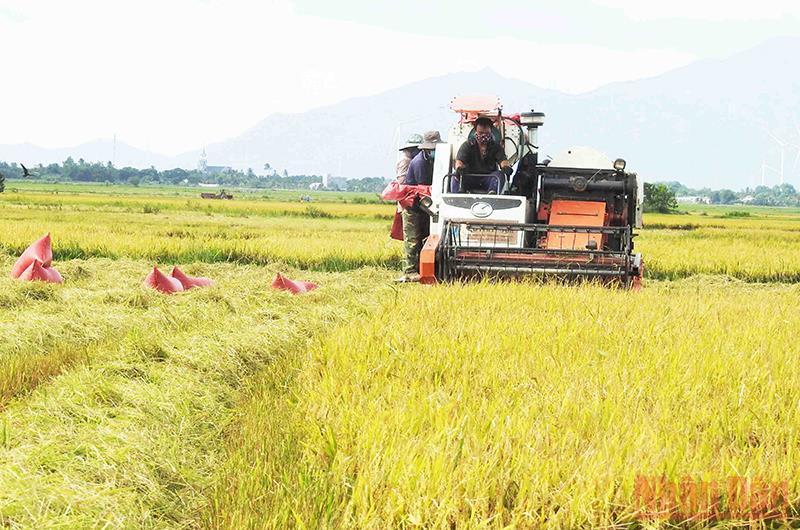Thách thức trong sản xuất vụ đông xuân ở Nam Trung Bộ và Tây Nguyên