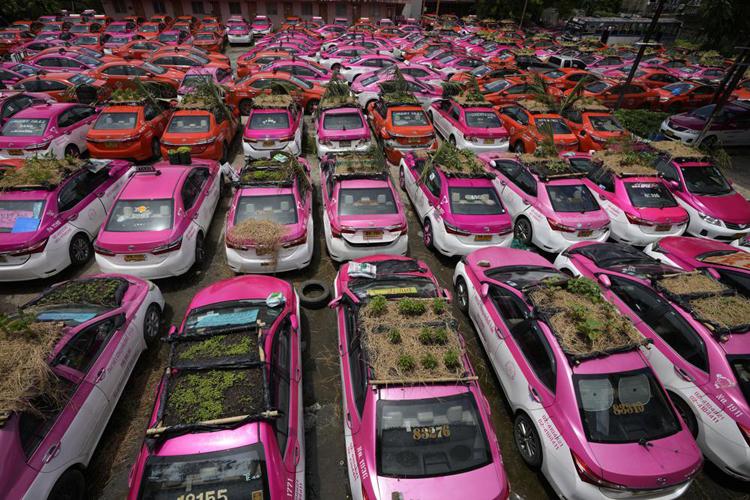 Thái Lan: Ế ẩm vì Covid-19, bãi taxi biến thành vườn rau ấn tượng