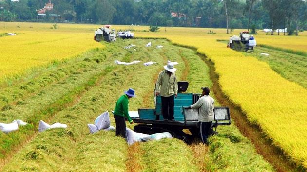 Tiền Giang: Nông dân trồng lúa Hè Thu phấn khởi vì trúng mùa, liên kết tiêu thụ tốt giữa mùa dịch