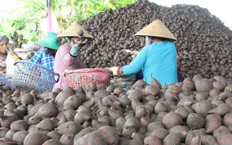 Vĩnh Long: Mỗi ngày có hàng nghìn tấn rau - củ - quả và hàng triệu con gia cầm cần được hỗ trợ tiêu thụ