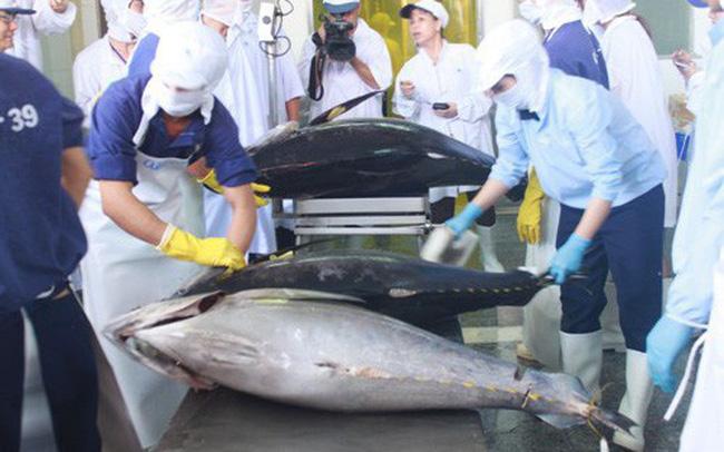 Xuất khẩu cá ngừ tháng 8/2021 đột ngột giảm sâu tại nhiều thị trường