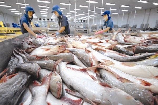 Xuất khẩu cá tra sang thị trường EU vẫn âm dù có lợi thế EVFTA